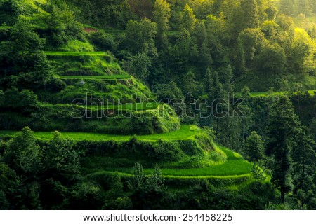 Zhaoxing Rice Terraces