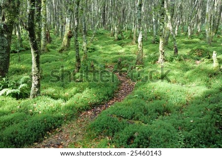 Zigzag footpath in forrest with fresh green moss