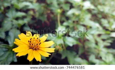 Zinnia flowerclose yellow zinnia flowerzinnia flower stock photo zinnia flowerclose up yellow zinnia flowerzinnia flower in the near road mightylinksfo Choice Image