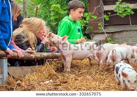 ZOETERWOUDE, THE NETHERLANDS: Young kids are having fun with the piglets in the petting zoo in Zoeterwoude, The Netherlands, on April 30, 2014
