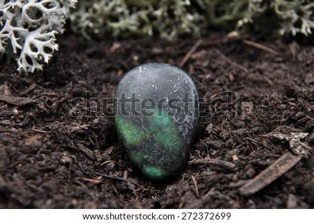 Zoisite on forest floor - stock photo