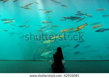 Zoo  Aquarium Alesund. Norway - stock photo