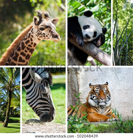Zoo collage with six photos of different animals - stock photo