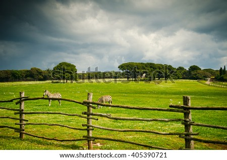 Zoo spring. Green pasture land with wooden fences. Pasture and barn from National Park Brijuni, in Croatia. - stock photo