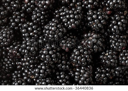 Zoomed in on blackberries all over