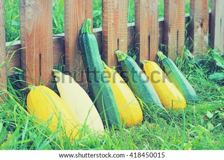 zucchini and vegetable marrows   - stock photo