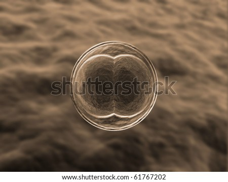 Zygote Cell Division, Life Begins - stock photo