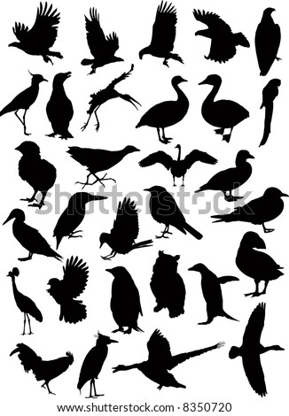 37 Birds silhouettes vector