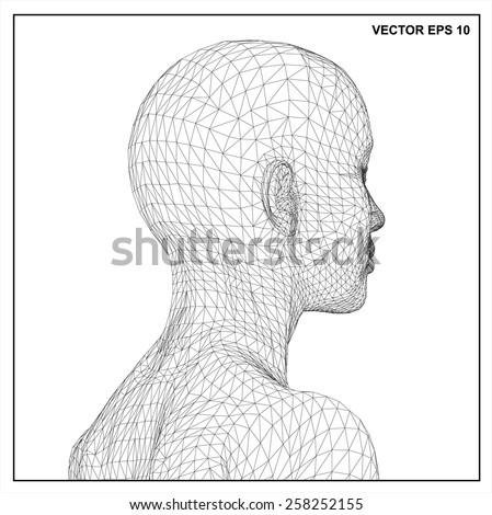 3d head of a woman in a wireframe view. - stock vector
