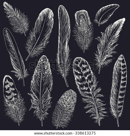 Feathers sketch set. Hand drawn vector illustration. - stock vector