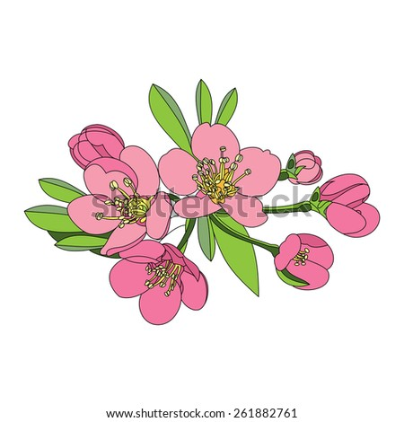 flowers fruit tree - apple, cherry or apr - stock vector