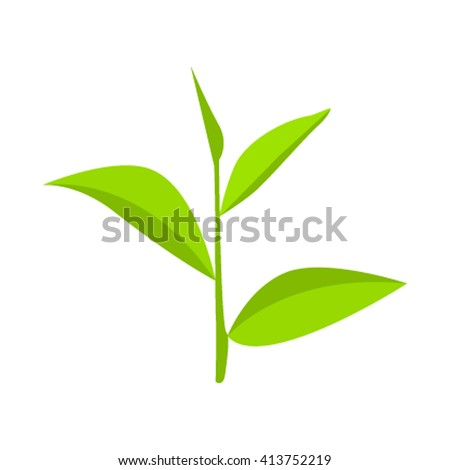 Green tea in a flat style isolated on white background. Vector illustration