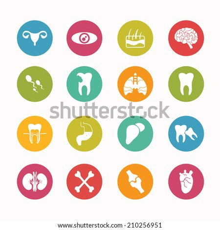 Human anatomy  icons set Circle Series - eps.10 - stock vector
