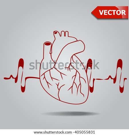 Human heart medical symbol of cardiology. Heart. Symbol of cardiology. Red heart.