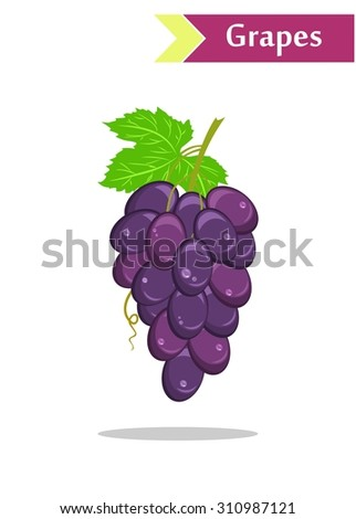 illustration with juicy and tasty fruits - grapes. - stock vector