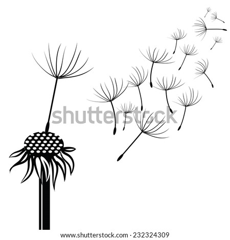 illustration with silhouette of dandelion  on a white background - stock vector