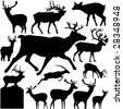 13 pieces of detailed vectoral deer  silhouettes. - stock vector