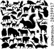 46 pieces of detailed vectoral wild animal silhouettes. - stock vector