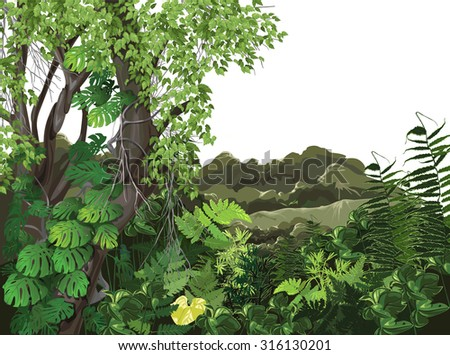 plant, nature, landscape (ecology)