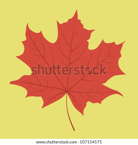 Red maple leaf. Vector illustration. - stock vector