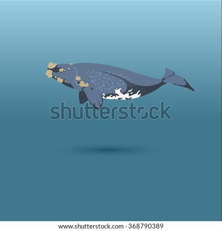 Right Whale into the sea / vector illustration / icon / whale, big whale, whales, whale on blue, whale, whale realistic, whale in sea - stock vector