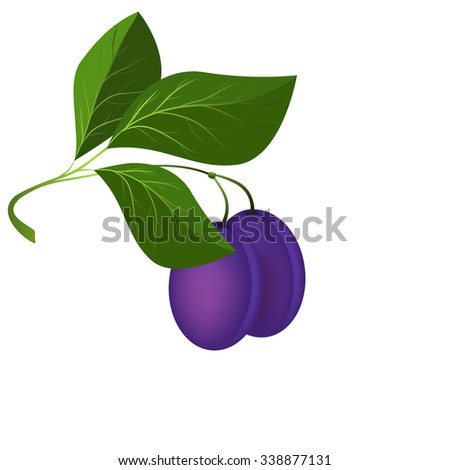ripe plums hang on a branch with leaves, vector illustration - stock vector