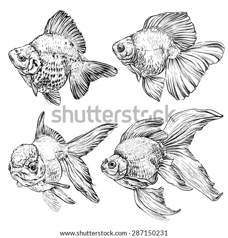 set of Goldfish. Vector illustration isolated on white