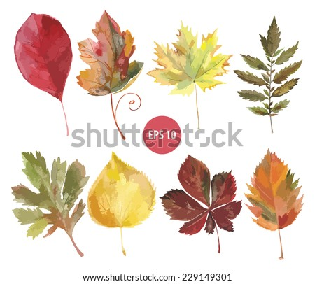 set of vector watercolor foliage, autumn leaf - stock vector
