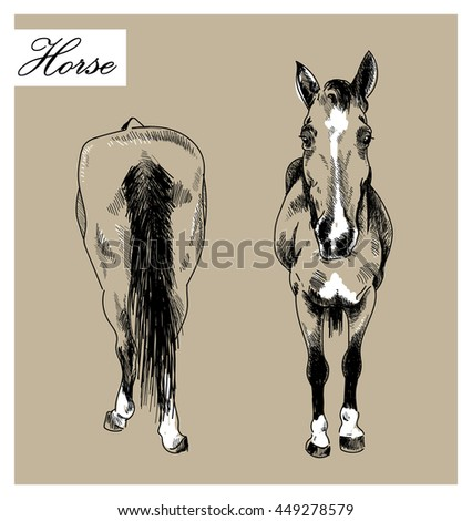 The horse in front and behind . Ink drawing vector freehand drawing . Engraving , detailed drawing . - stock vector