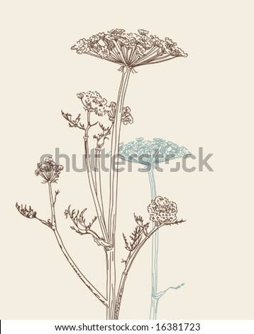vector freehand drawing of umbellate plant