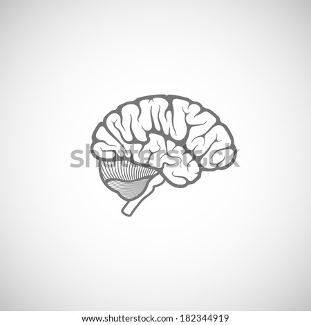 vector illustration of human brain  - stock vector
