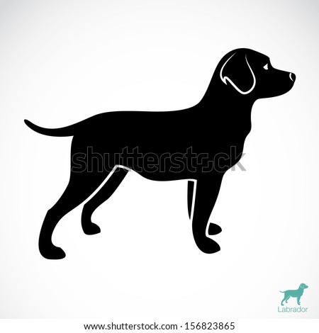 Vector image of an dog labrador on white background  - stock vector
