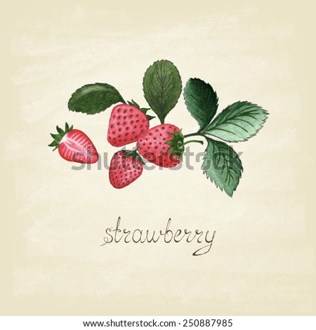 Watercolor hand drawn red strawberry. Poster. Organic food. Vintage style. Vector  illustration. - stock vector