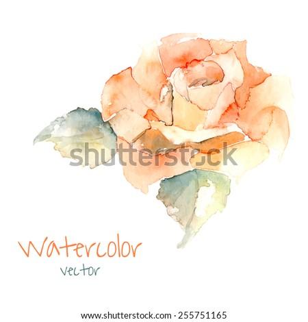 Watercolor rose. Vector hand drawn illustration. Vintage element fot your design.  - stock vector