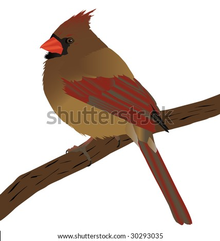 A beautiful female cardinal on a branch.Layered perfectly for color changes.