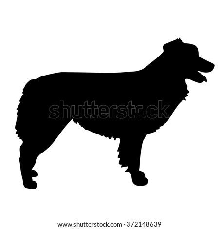 A black silhouette of a standing Australian Shepherd - stock vector