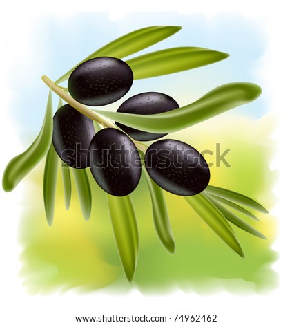 A branch of black olives. Vector illustration on fullcolor background. - stock vector