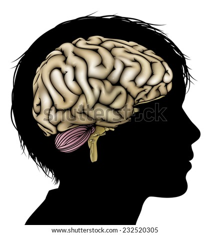 A childs head in silhouette with brain. Concept for child mental, psychological development, brain development, learning and education or other medical theme - stock vector