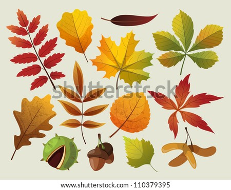 A collection of colorful autumn leaf designes. - stock vector