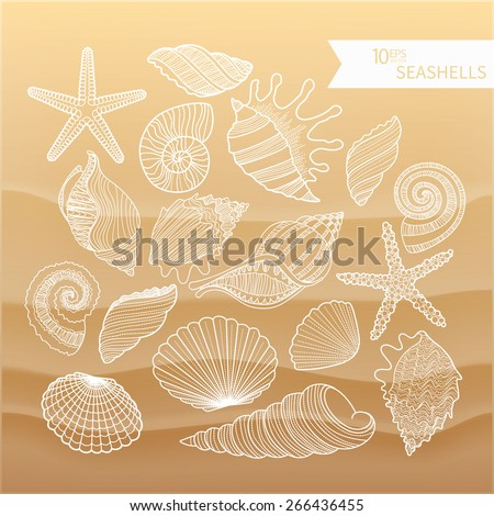 A collection of sea shells. The contours of seashells on the sand. Line drawing vector set of shells, stars objects and symbols. Vector illustration