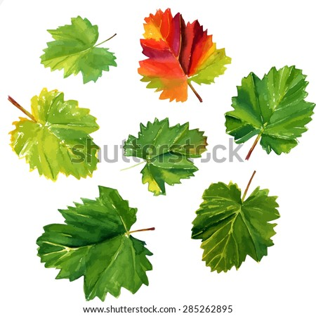 A collection of watercolour vine leaves on white background, scalable vector drawing - stock vector