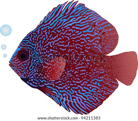 A detailed illustration of a snakeskin discus fish - stock vector