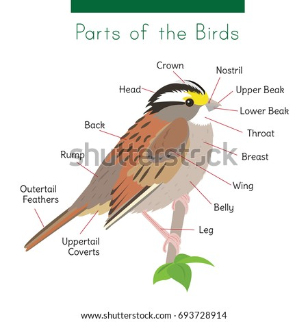 Parts Of Bird Diagram - Wiring Diagram For Light Switch •