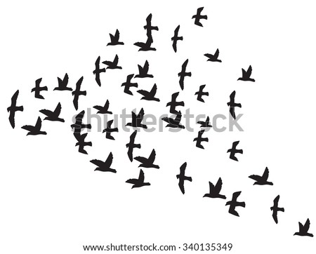 a flock of flying birds (silhouette of the birds in flight) - stock vector