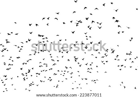 a flock of flying birds. Vector - stock vector