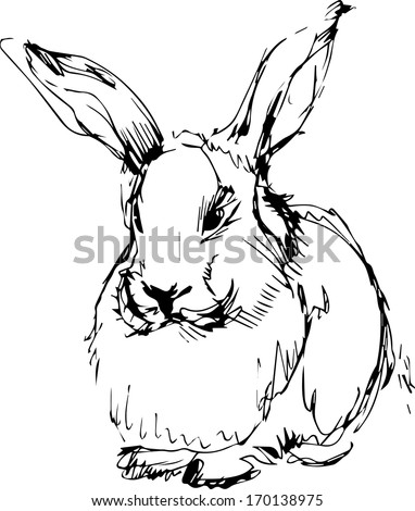 a image of a rabbit with long ears - stock vector