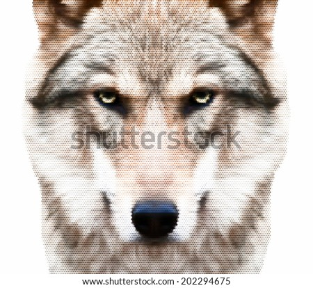 A look straight into your soul of a severe wolf female. Menacing expression of the european wolf, very beautiful animal and extremely dangerous beast. Unusually amazing dotted vector portrait.  - stock vector