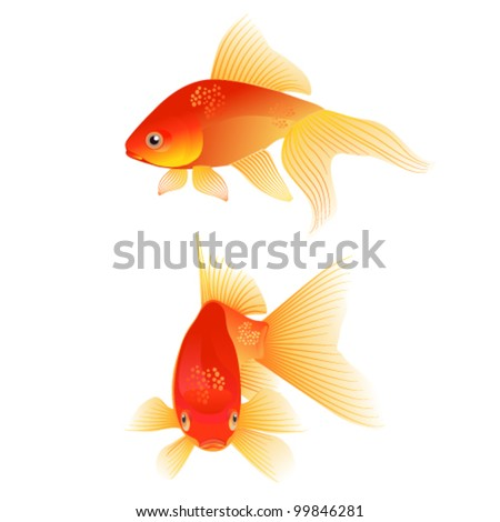 A pair of Goldfishes