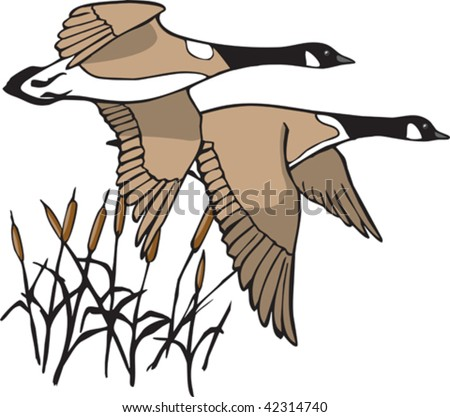 A pair of illustrated Canada Geese in flight. Both geese and cattails are on separate layers.