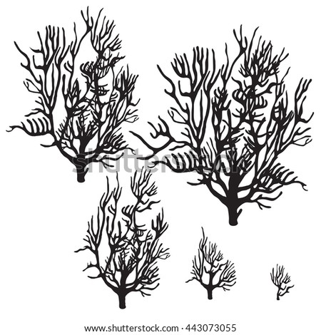 A set of coral silhouettes isolated on white background. Vector illustration. - stock vector